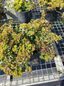 Plantscape flowers pre-prune