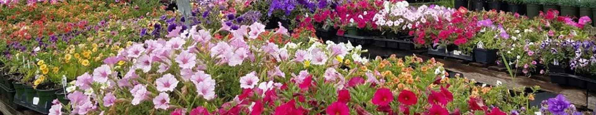 plantscape greenhouses