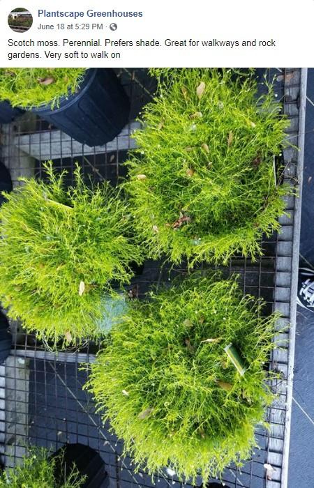 Plantscape on Facebook